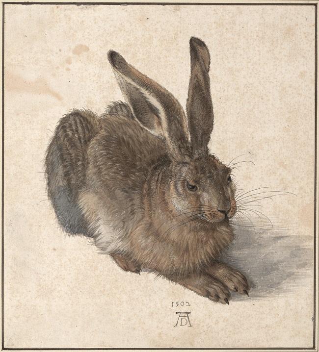 Dürer Feldhase