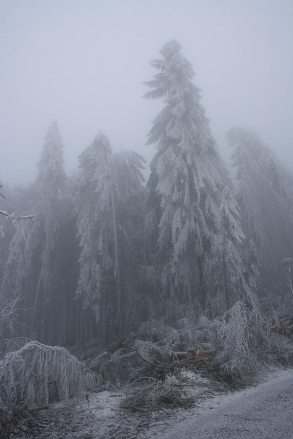 michi_eis_bäume