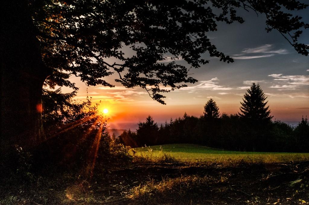 """""""Mystisches Wandern"""" am Panoramahöhenweg Foto: Friedrich Bachner"""